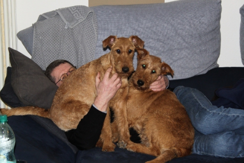 2011-01-17-hunde-couch-002-640x427
