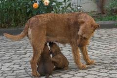 Romulus und Remus, 5 Wochen
